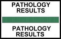 S-8053 - Stick On Index Tabs, PATHOLOGY RESULTS (Green) 1-1/2
